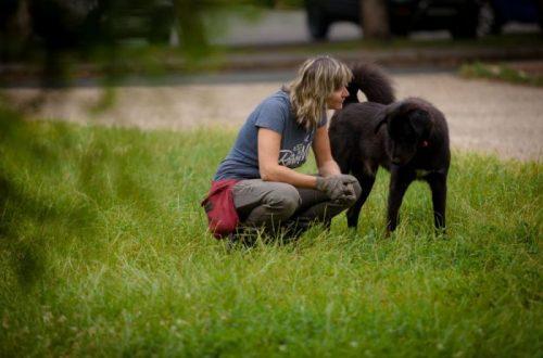 Egyéni kutya tréning